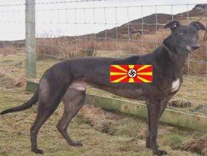 skopdog1